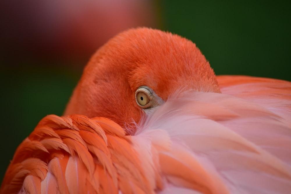 closeup photo of red bird