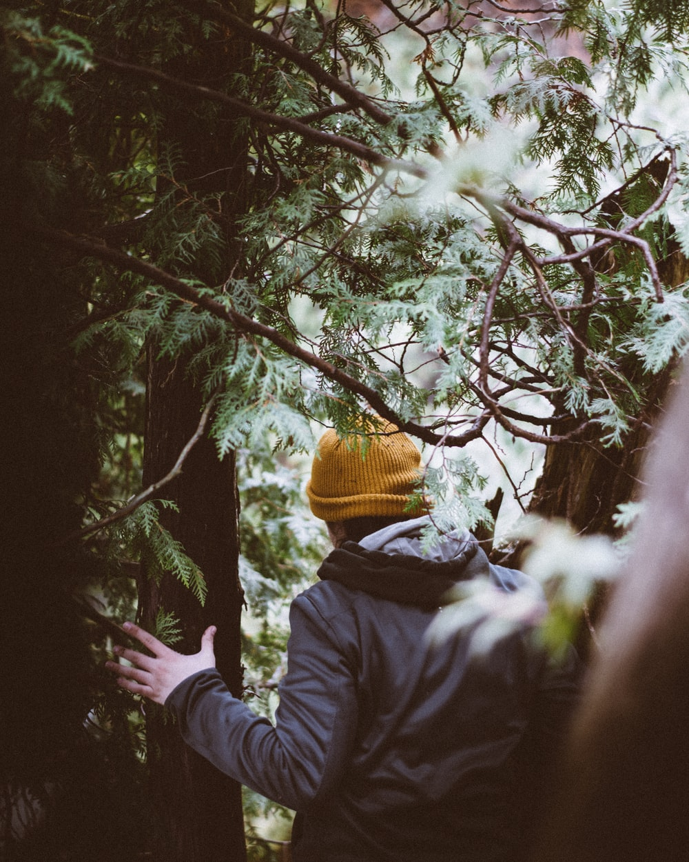 person holding at tree branch