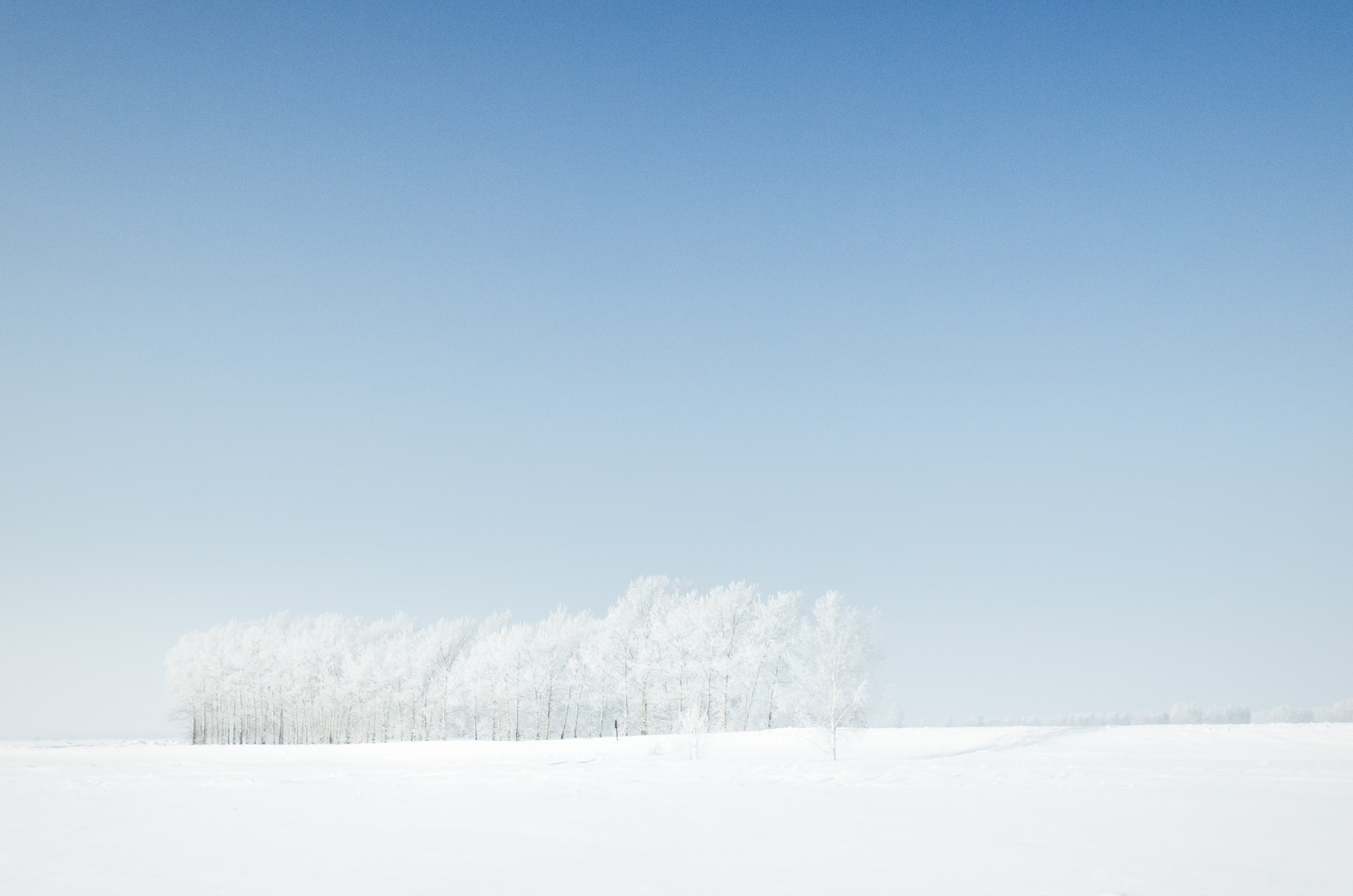 snow-coated field under clear blue sky during daytime