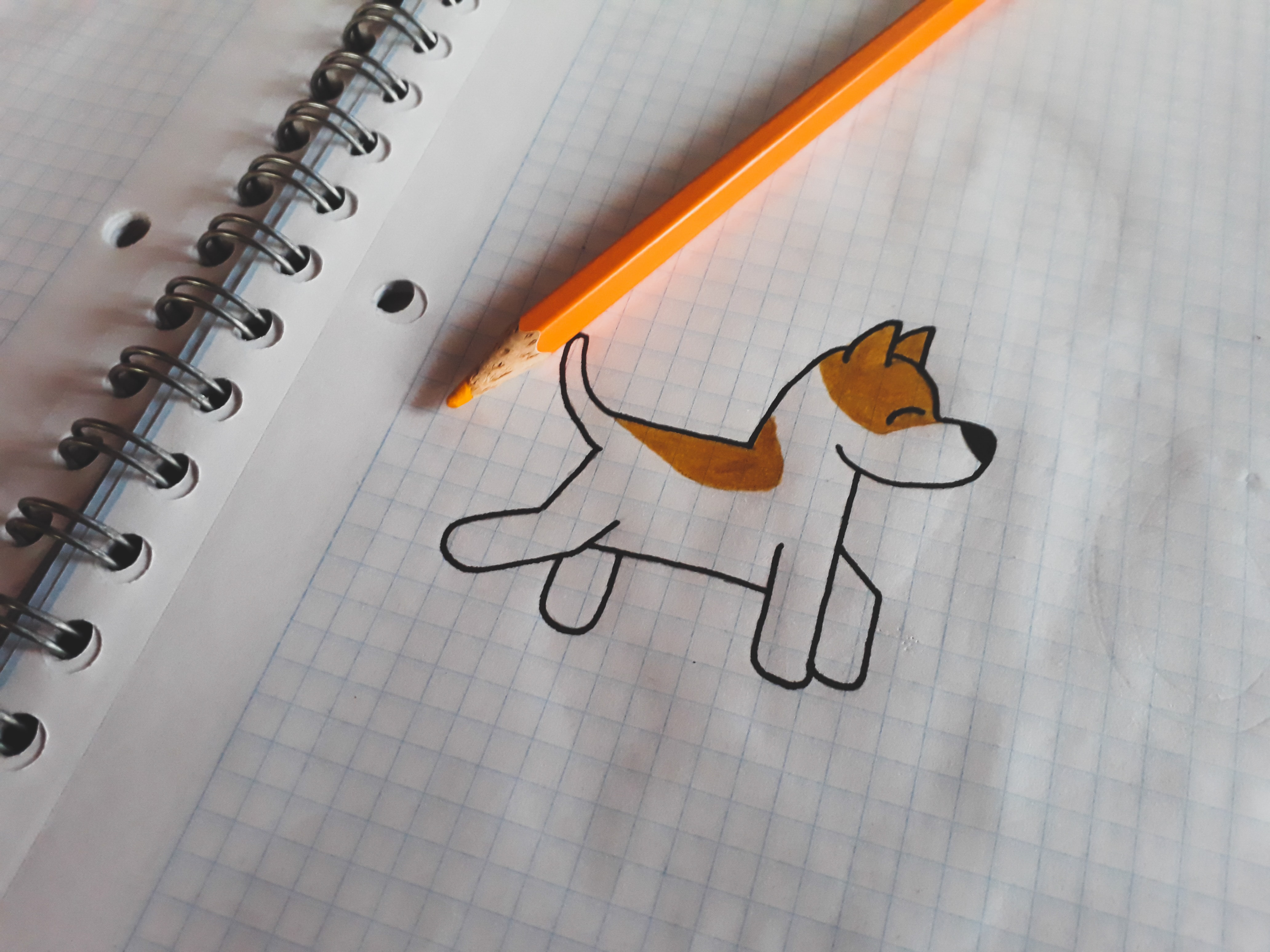 Drawing a dog on graph paper.