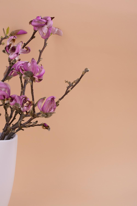 purple-petaled flowers