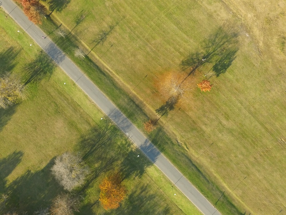empty road between trees near grass field at daytime