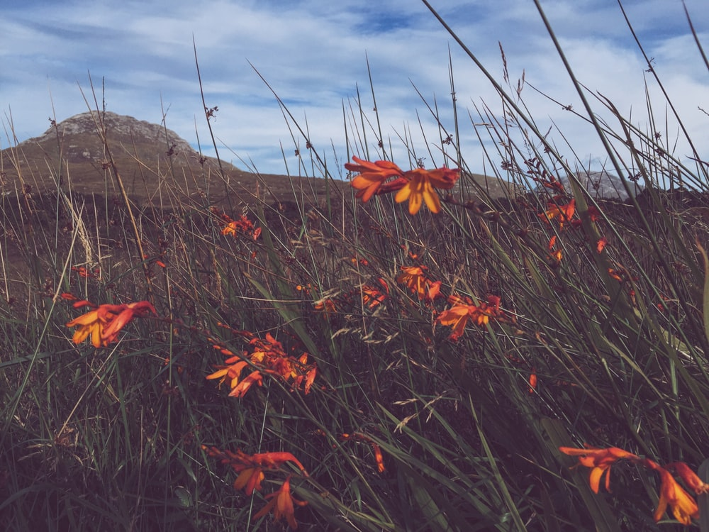 photography of orange petaled flowers during daytime