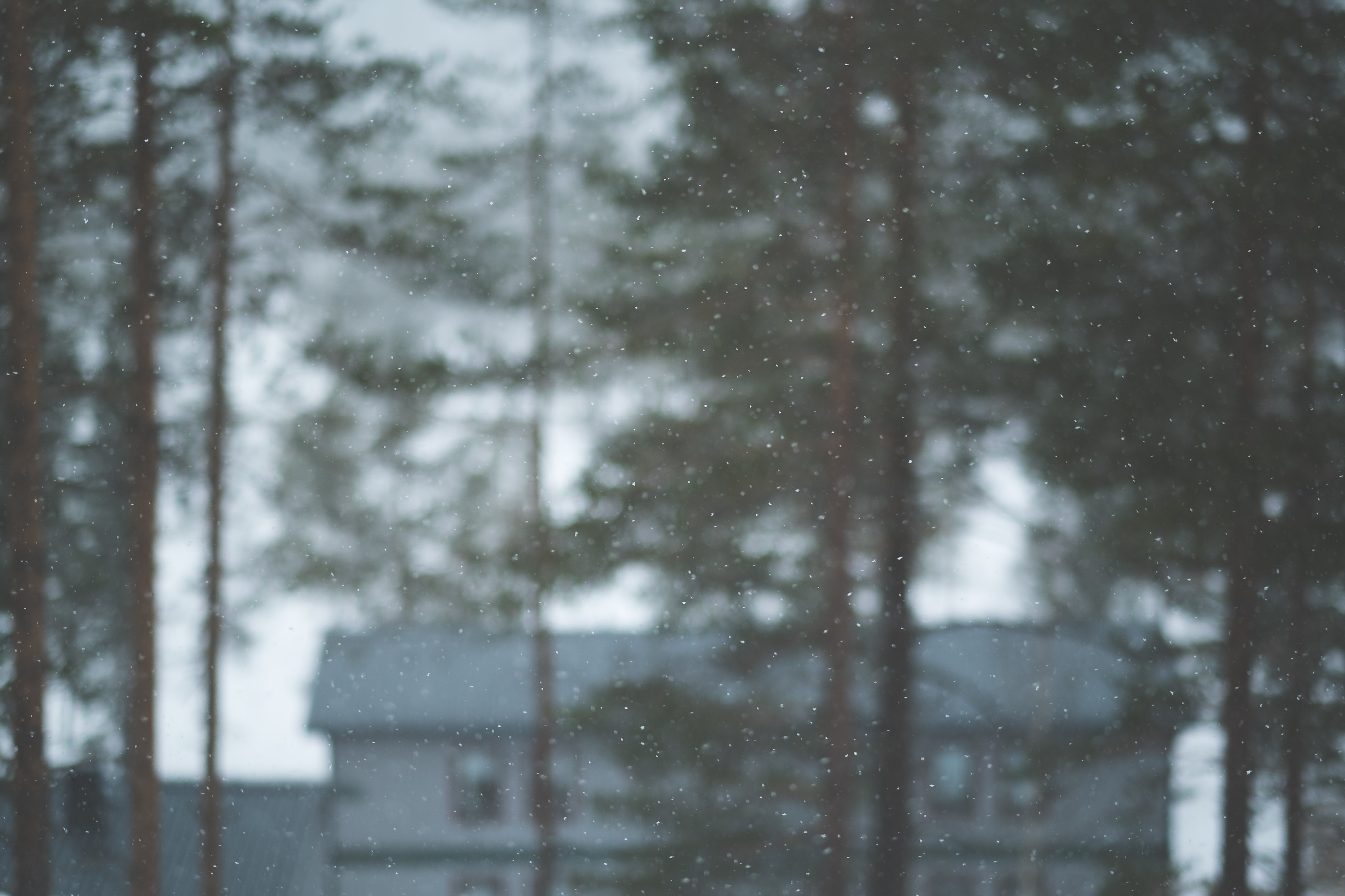 Snowflakes falling in the foreground with  tall trees and a house out of focus in the background