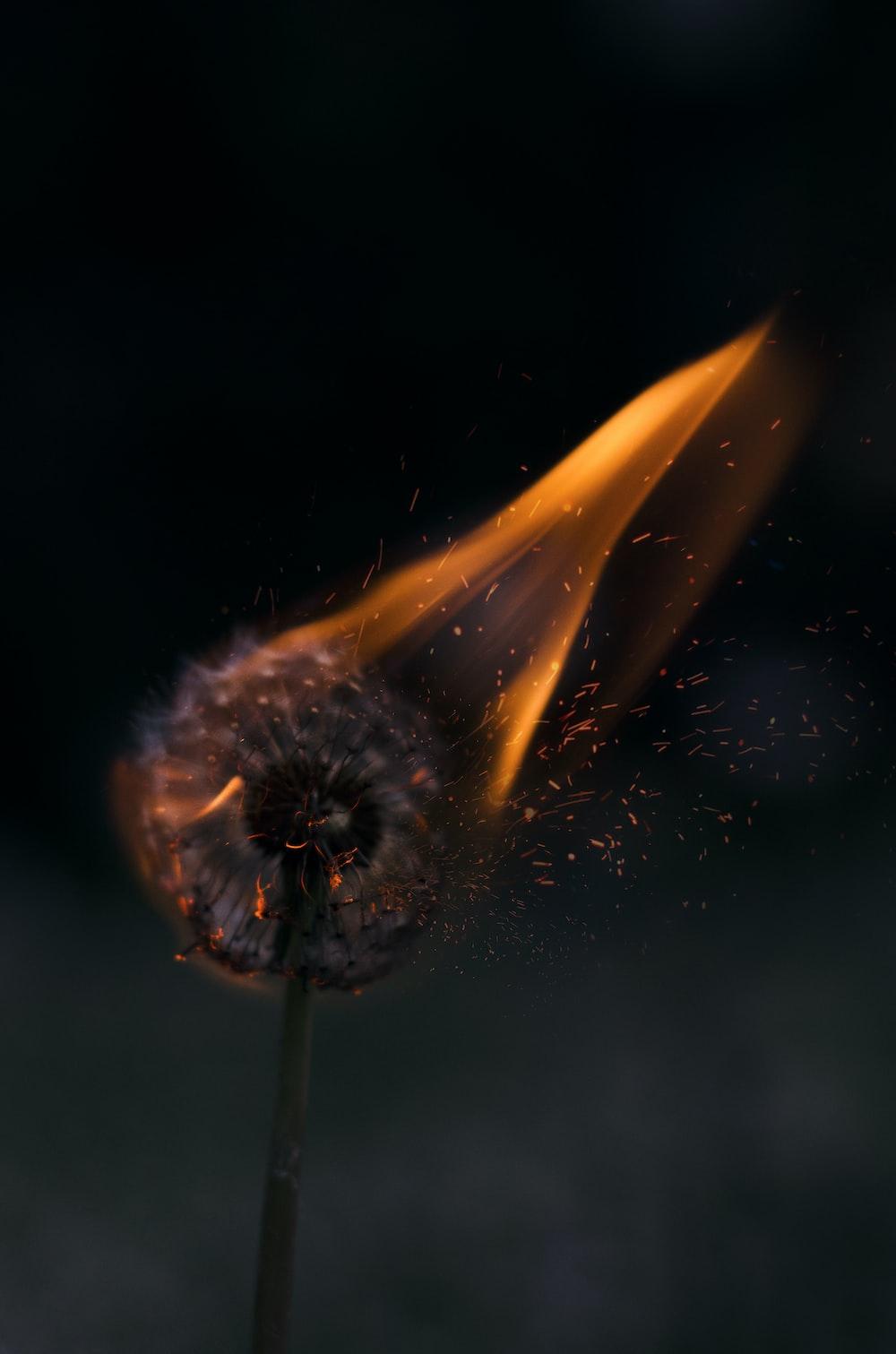 burn wallpapere de grăsimi)