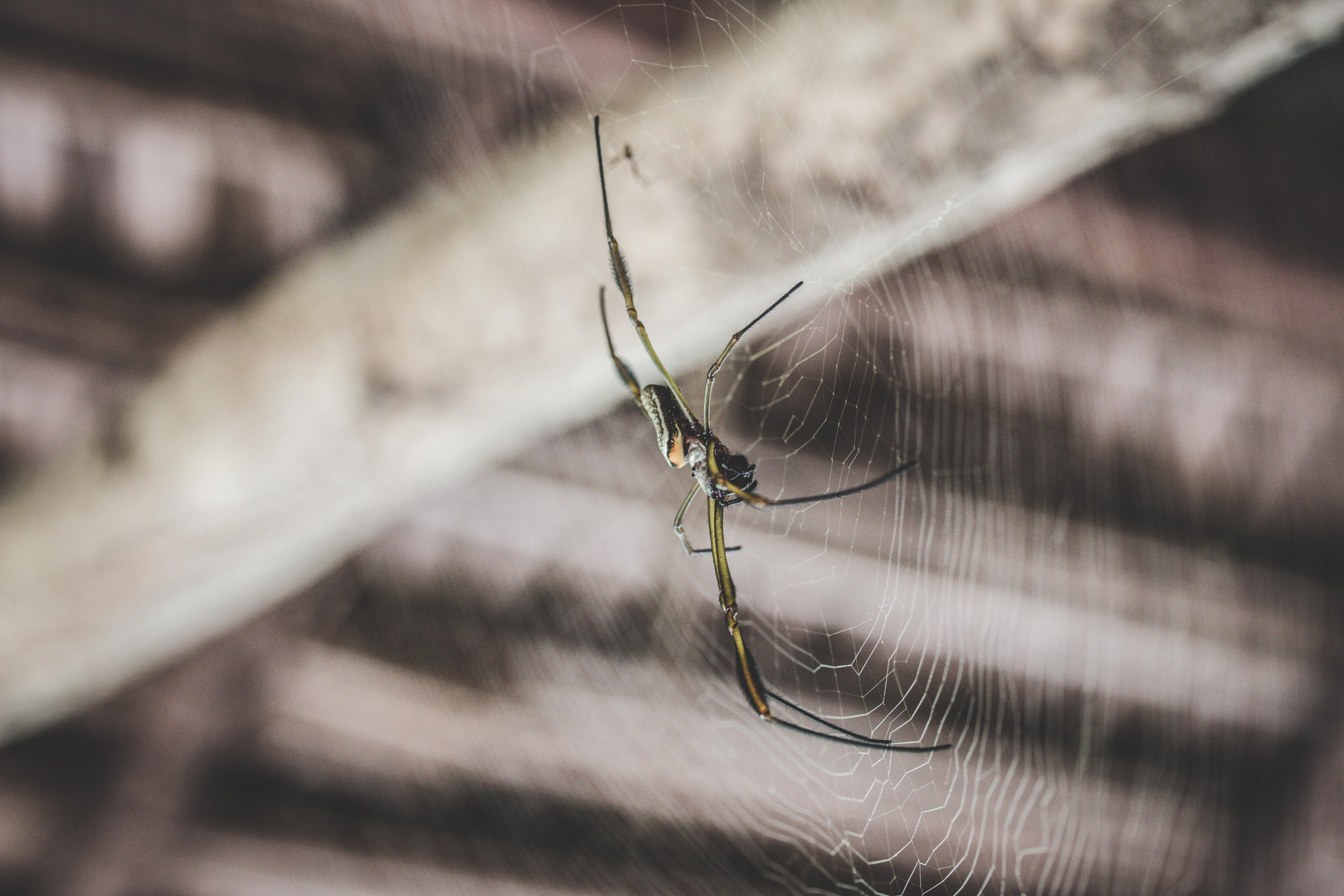 Macro view of a spider on a circular spider web in a wooden building
