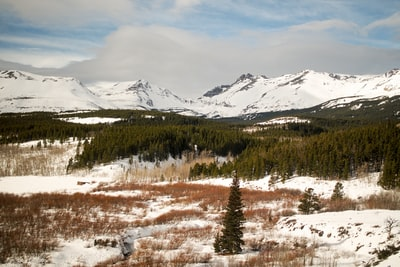 photo of snow-capped mountains nearby pine trees glacier national park teams background