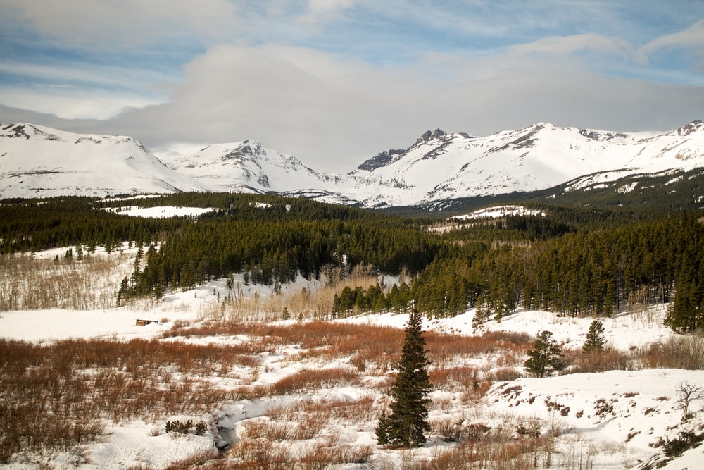 photo of snow-capped mountains nearby pine trees