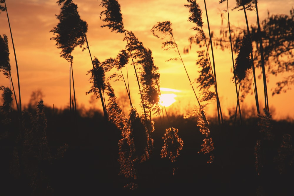 shallow focus photography of plants during sunset