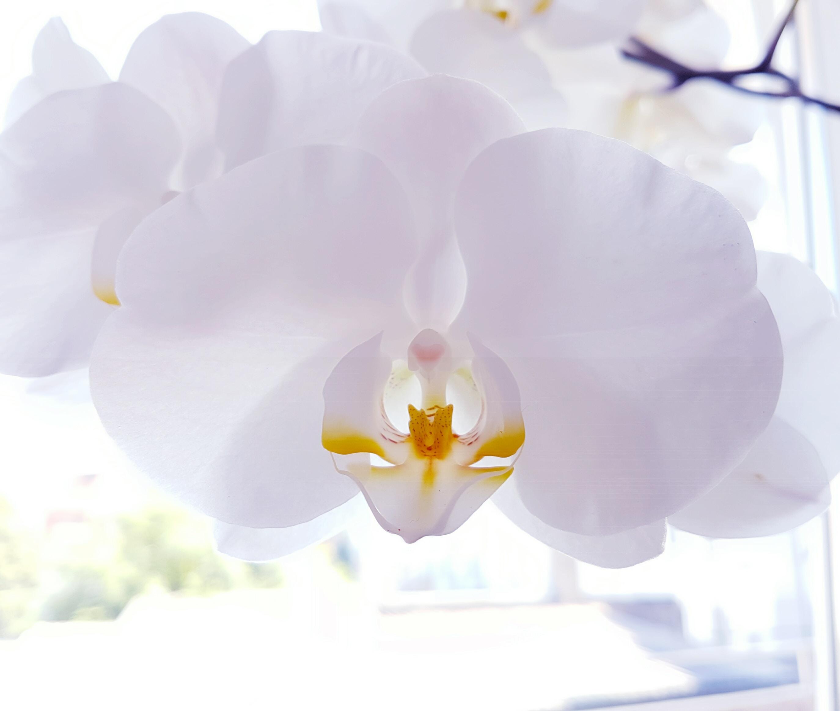 A closeup of white flower petals inside.