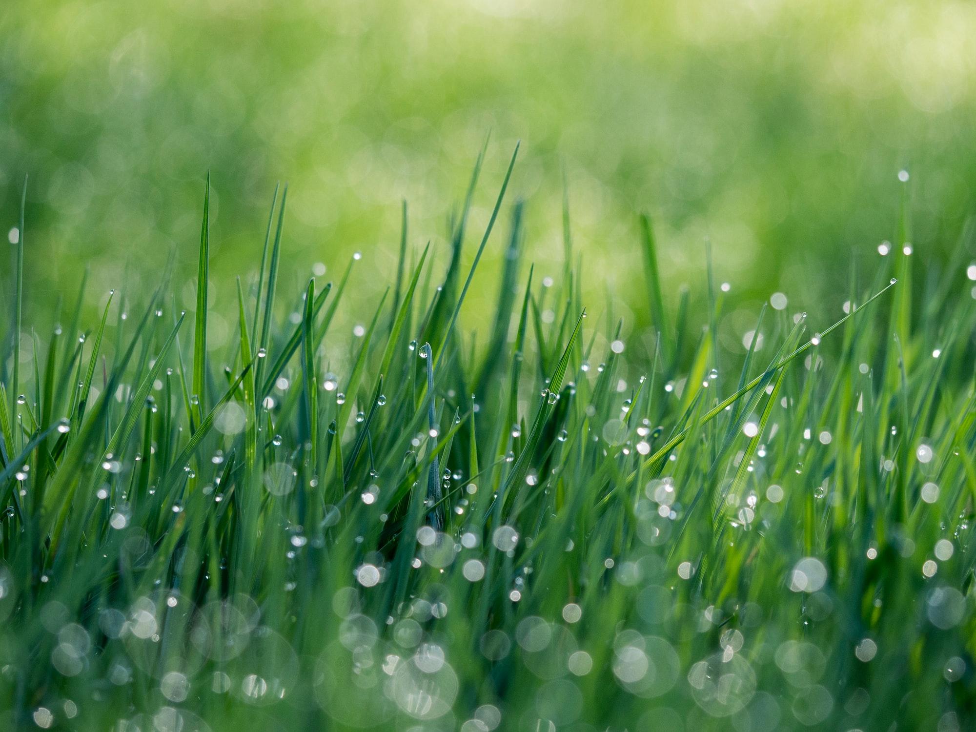 草刈とウイルス感染症