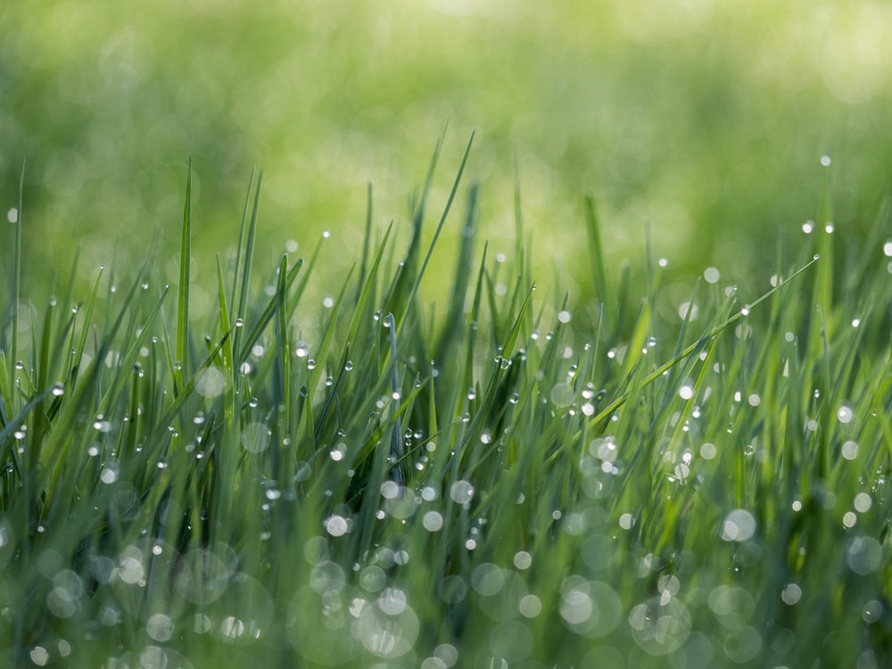 green grass field with water dews
