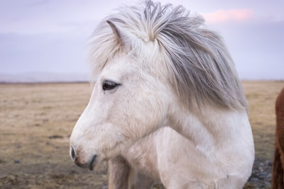 white horse pony zoom background