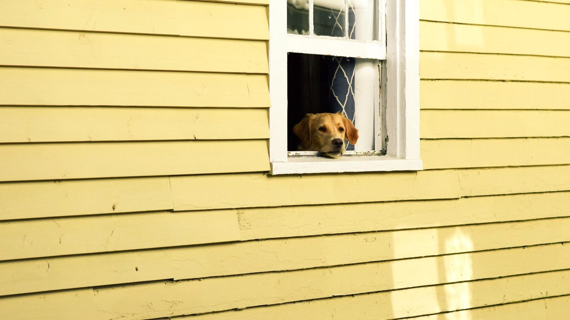 Random Dog Photo
