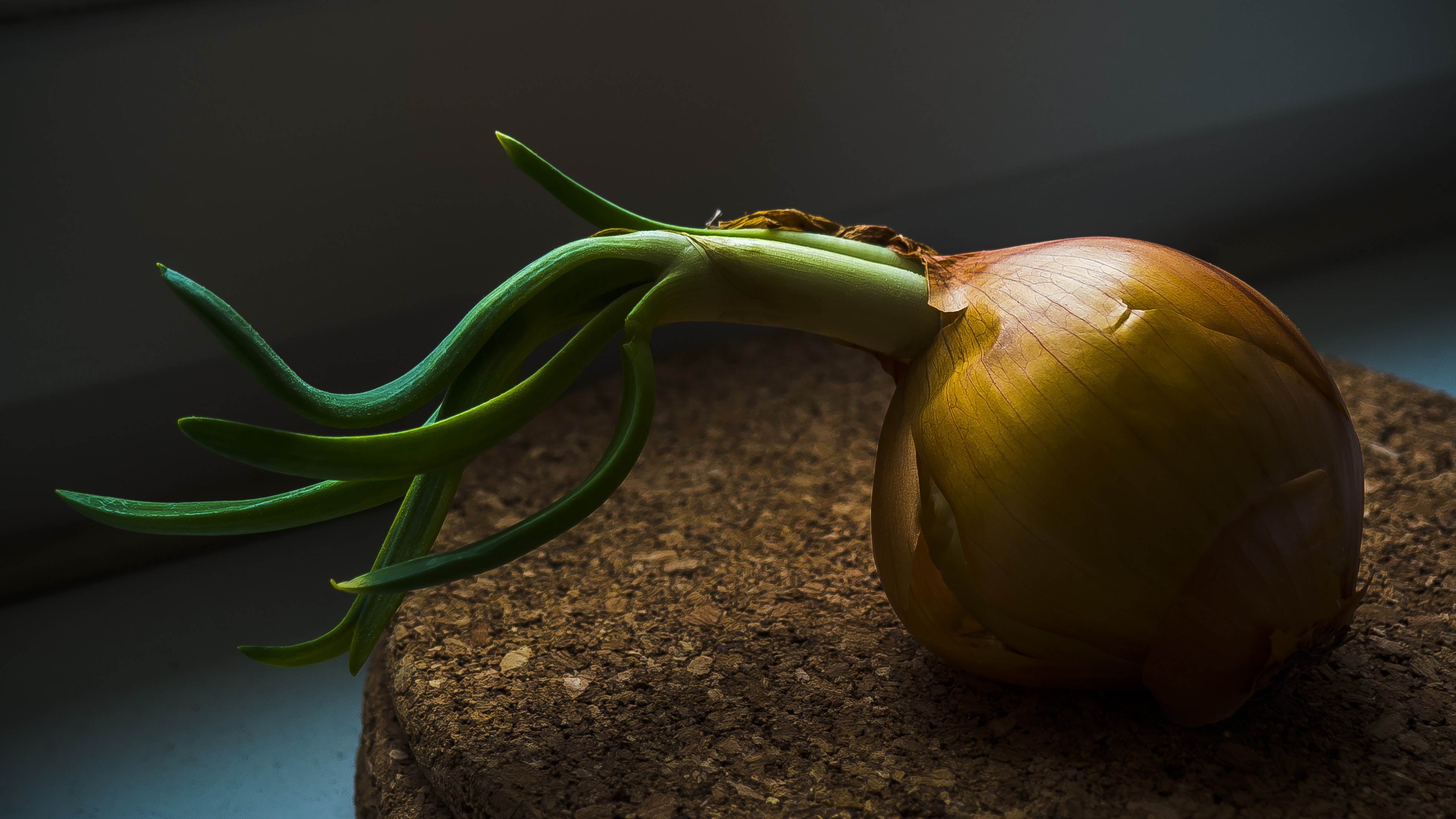 brown onion with green sprout