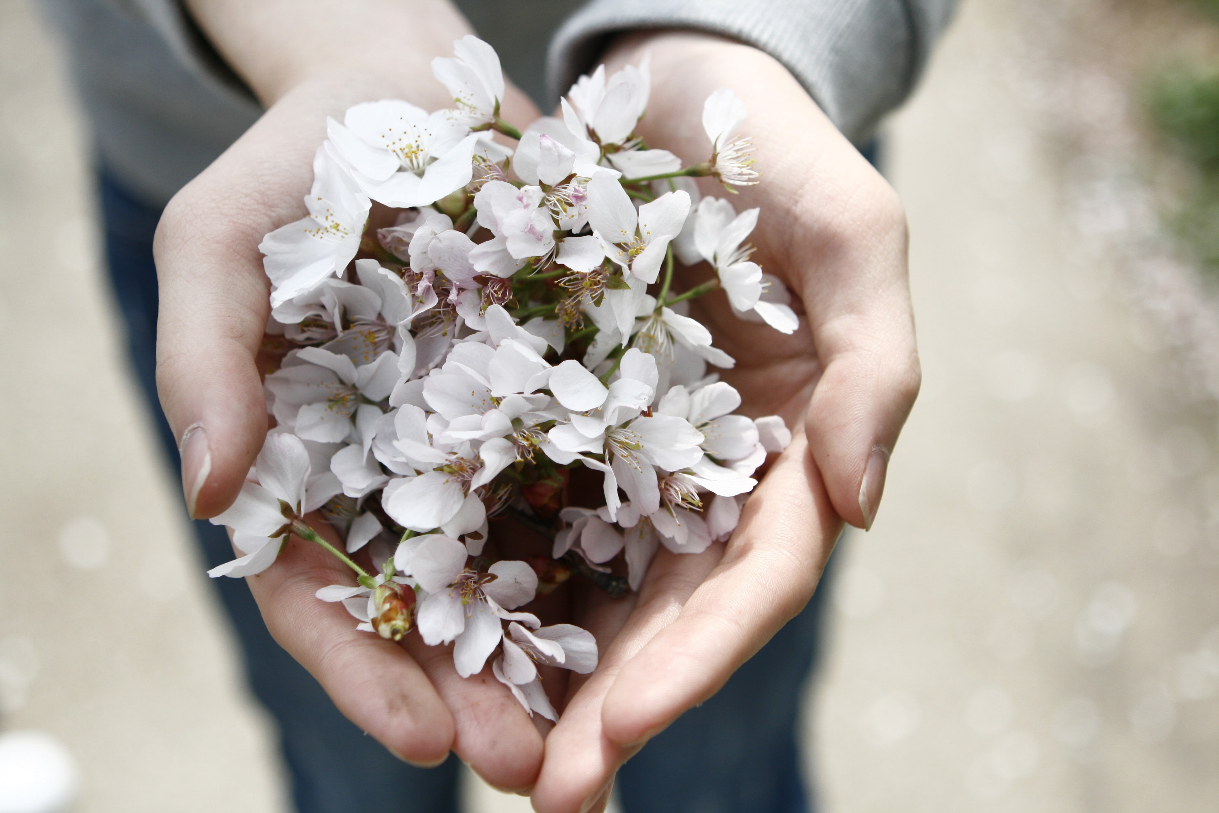 selective focus photography of person holding white clustered flowers
