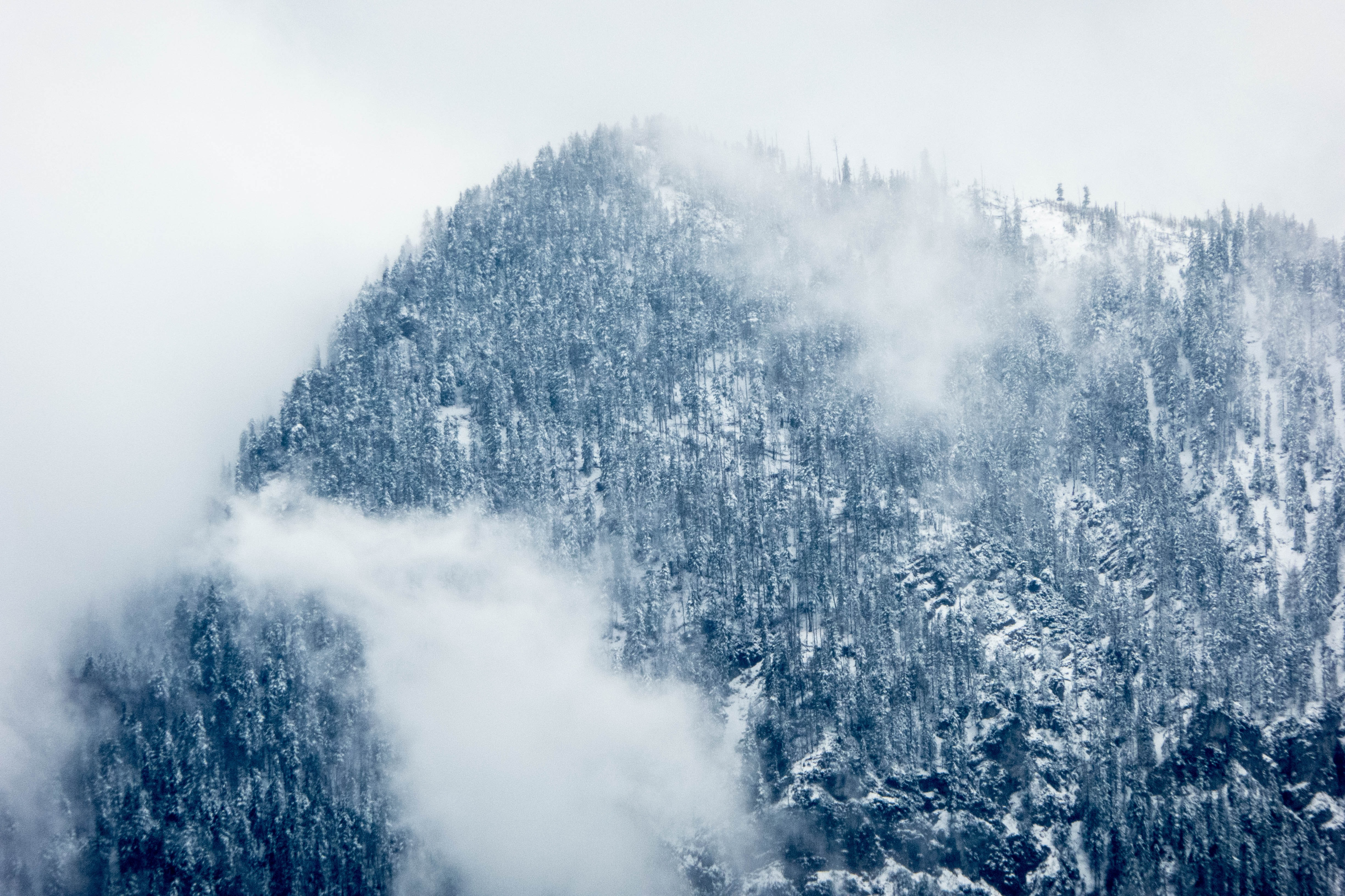 A tall wooded mountain wreathed in a thick mist