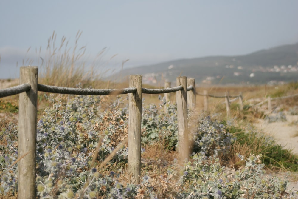 plants with flowers under the wooden fence