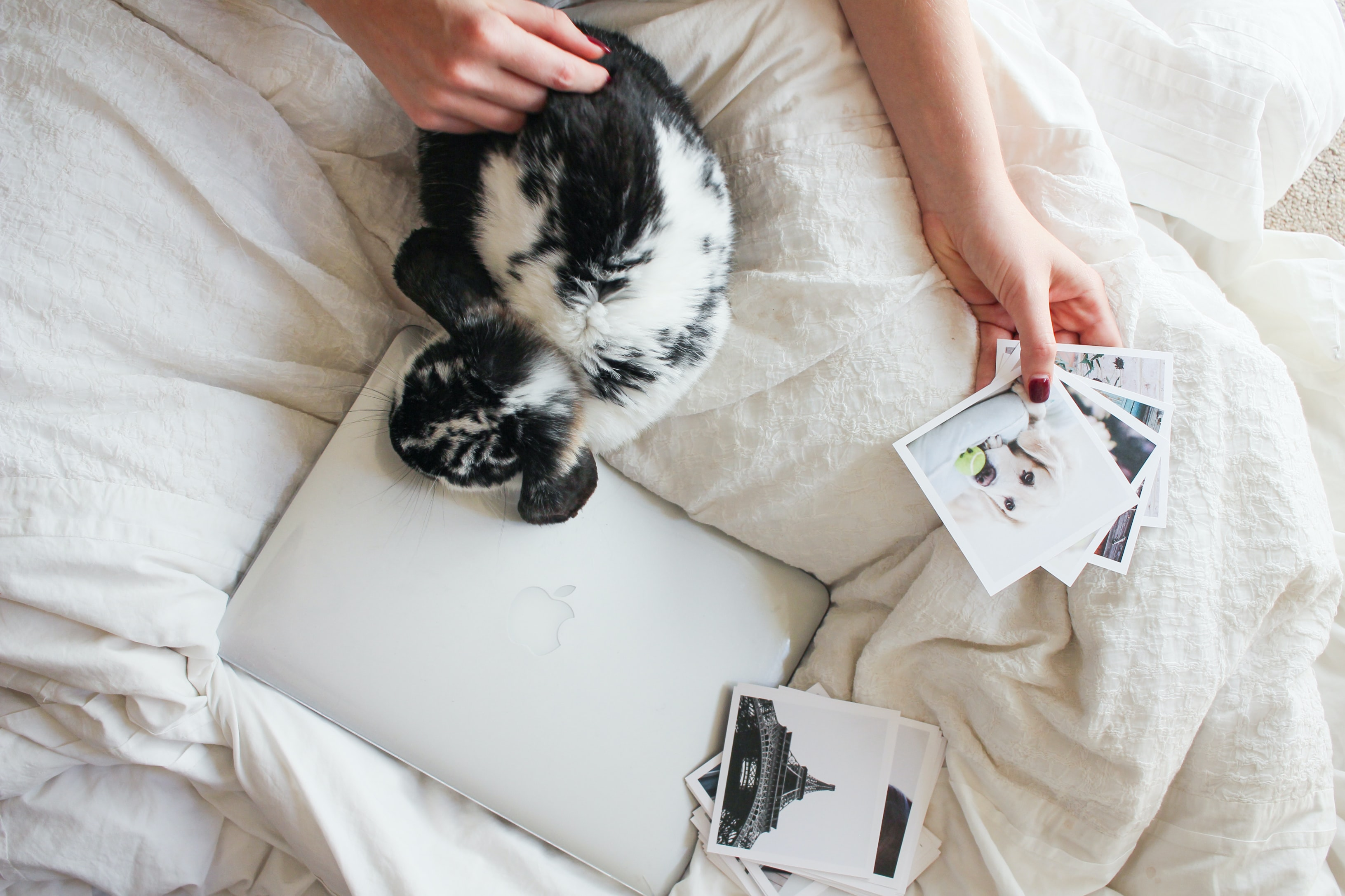 A person stroking a rabbit while looking at photo prints in bed