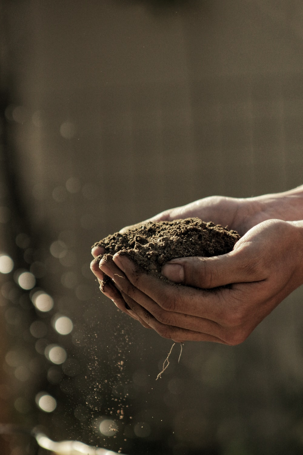 bokeh photography of person carrying soil