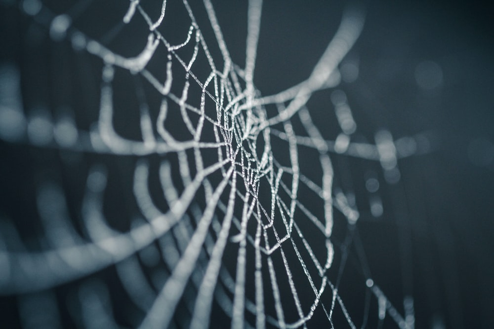 selective focus photography of spiderweb