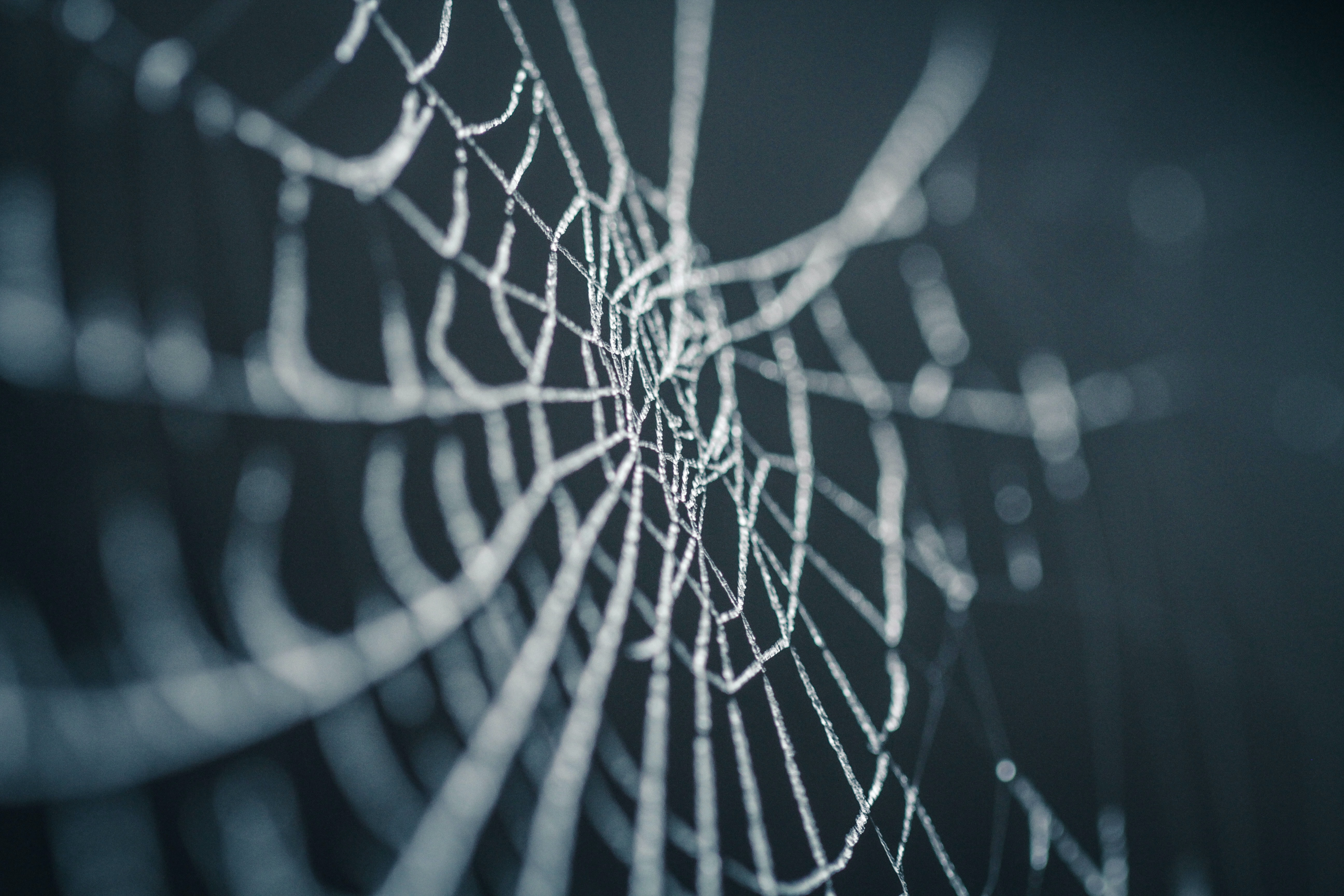 selective focus photography of spiderweb