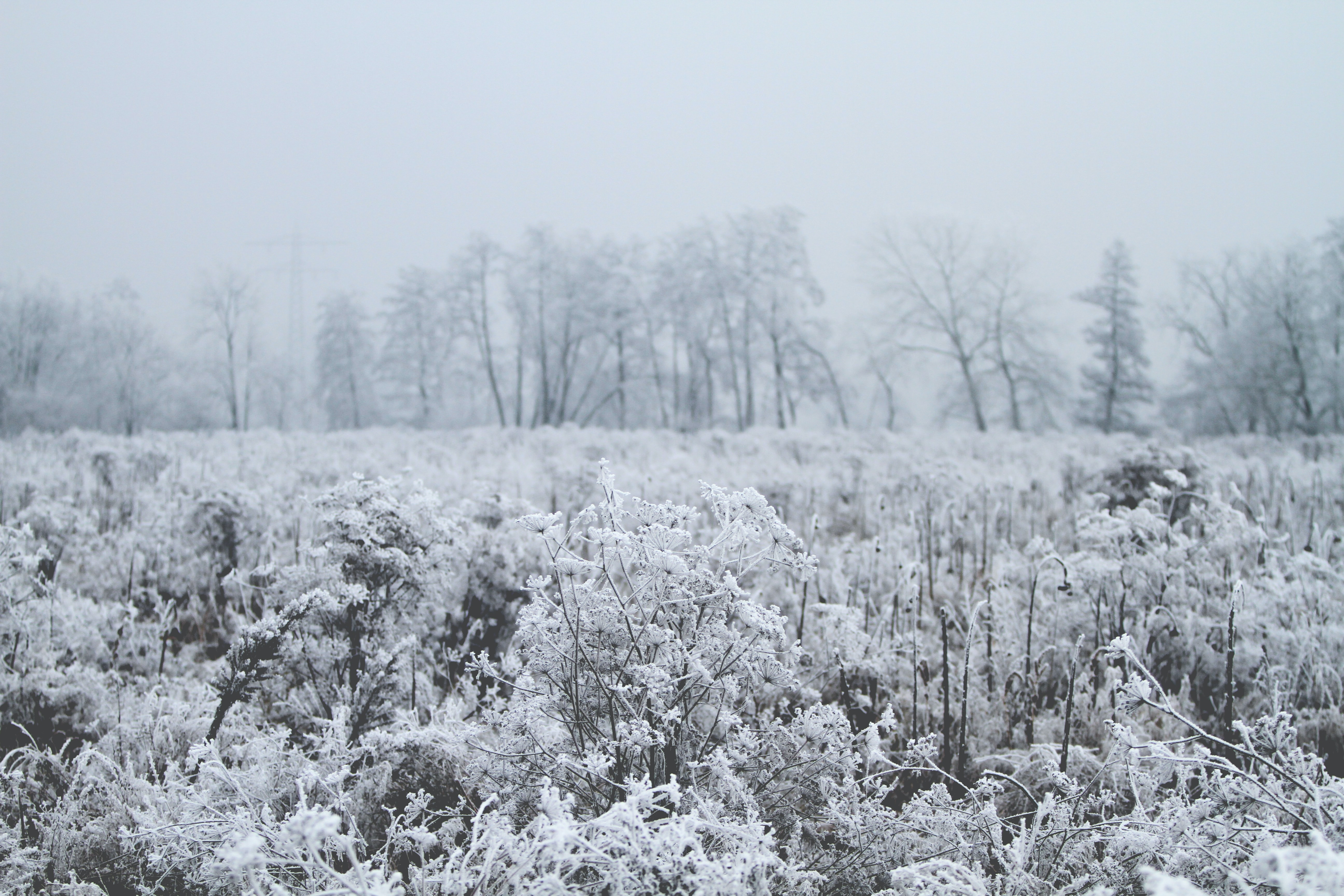 A frozen meadow dotted by trees at Neumühl