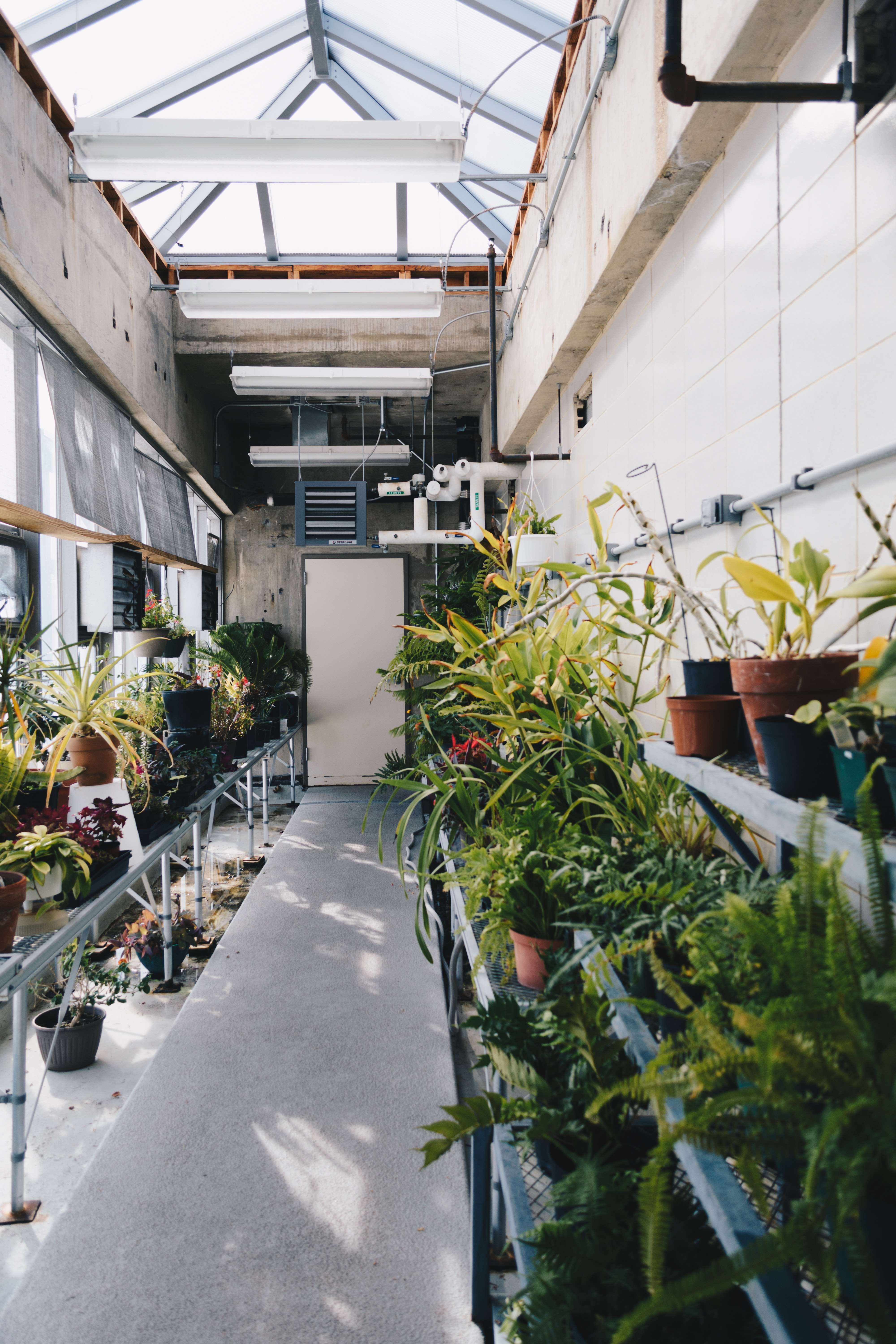 Potted plants on shelves in a greenhouse