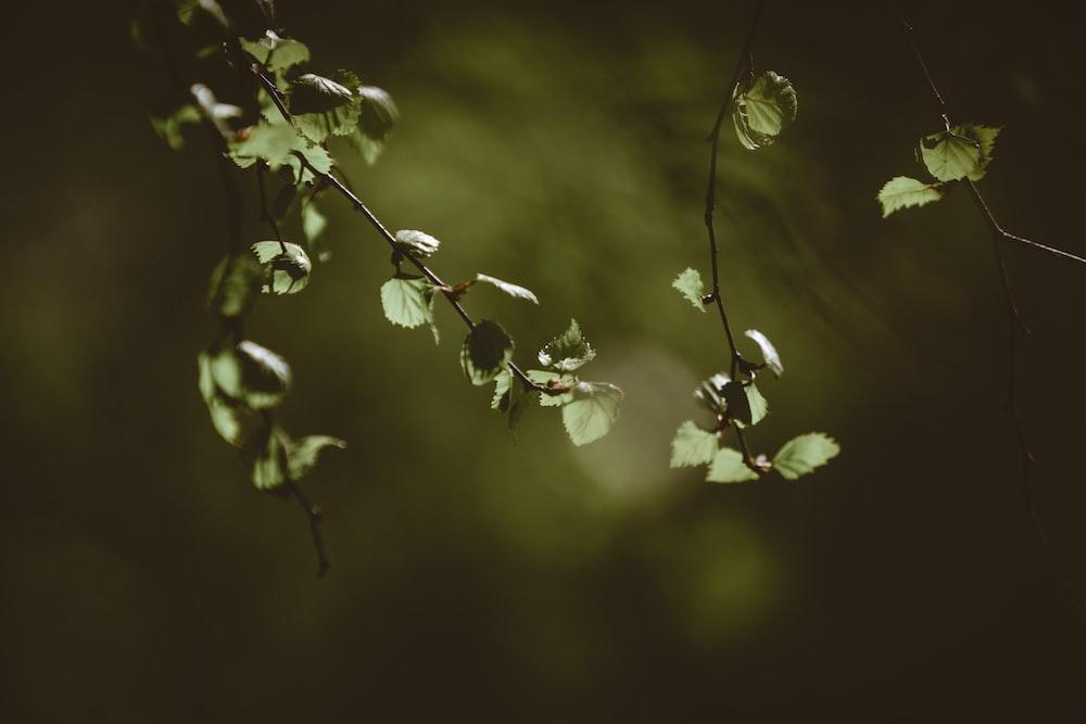 green leaf plant closeup photography