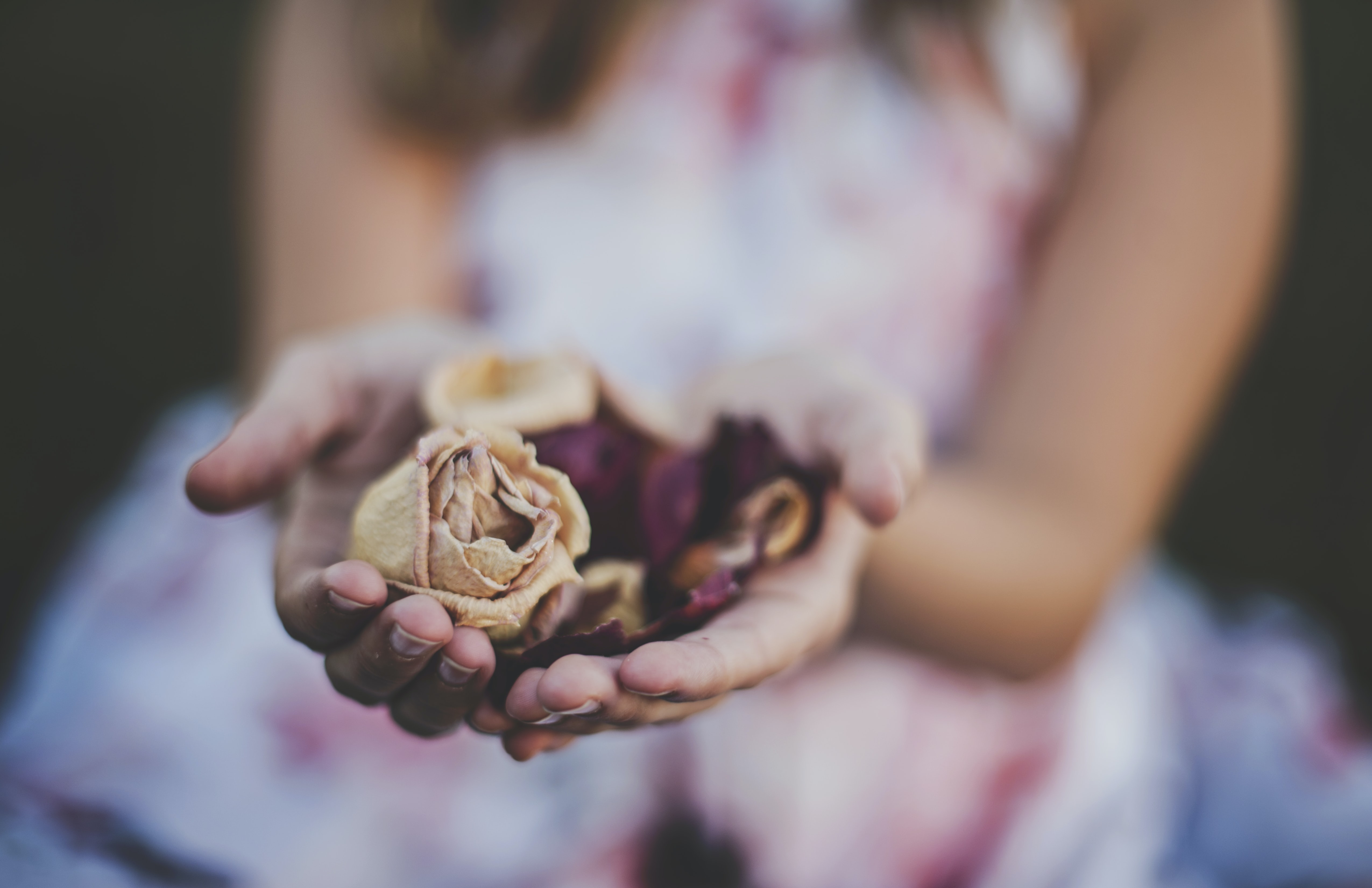 A woman's cupped hands holding a dried rose and other flower petals