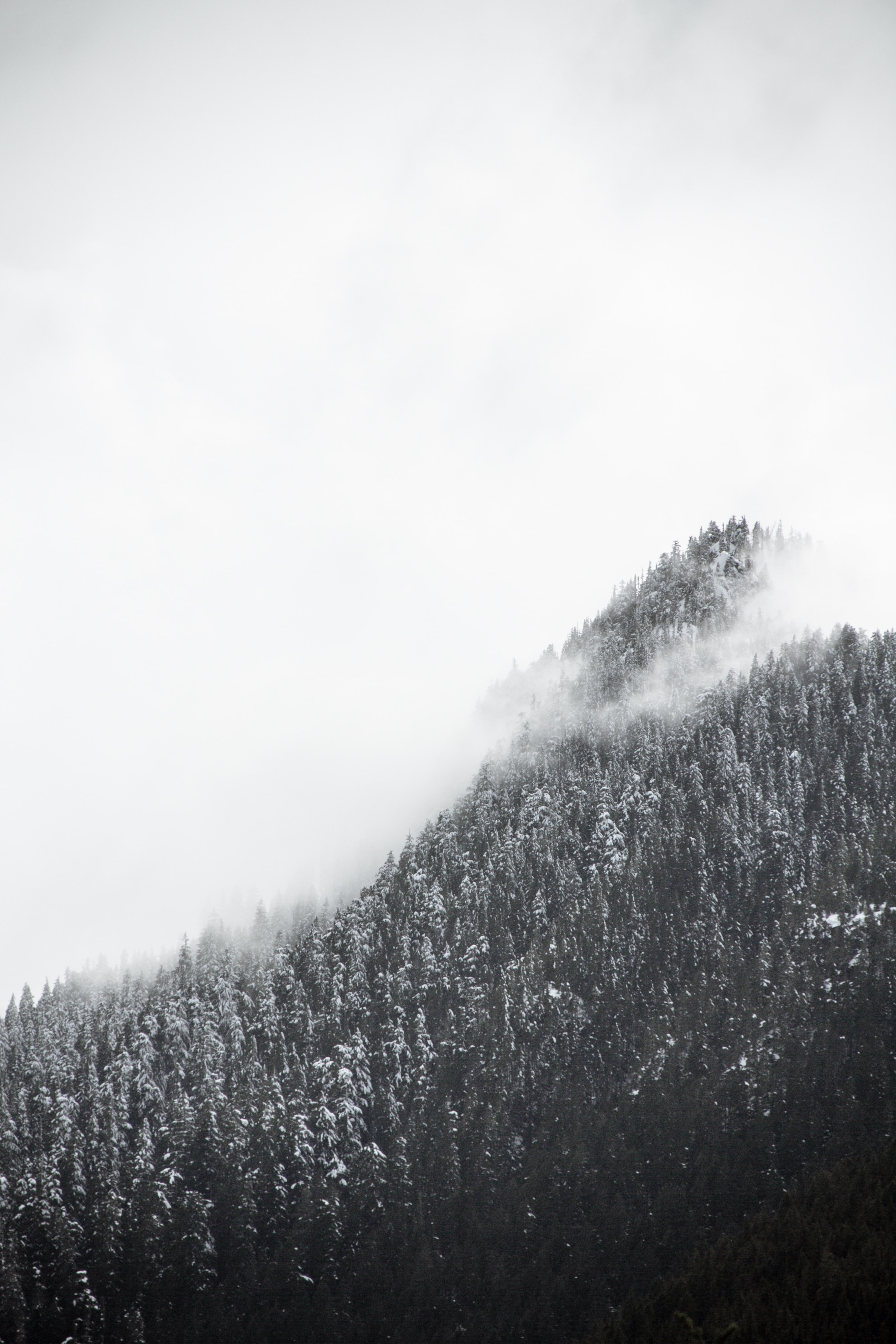 Snowy trees on a mist-wreathed mountain slope