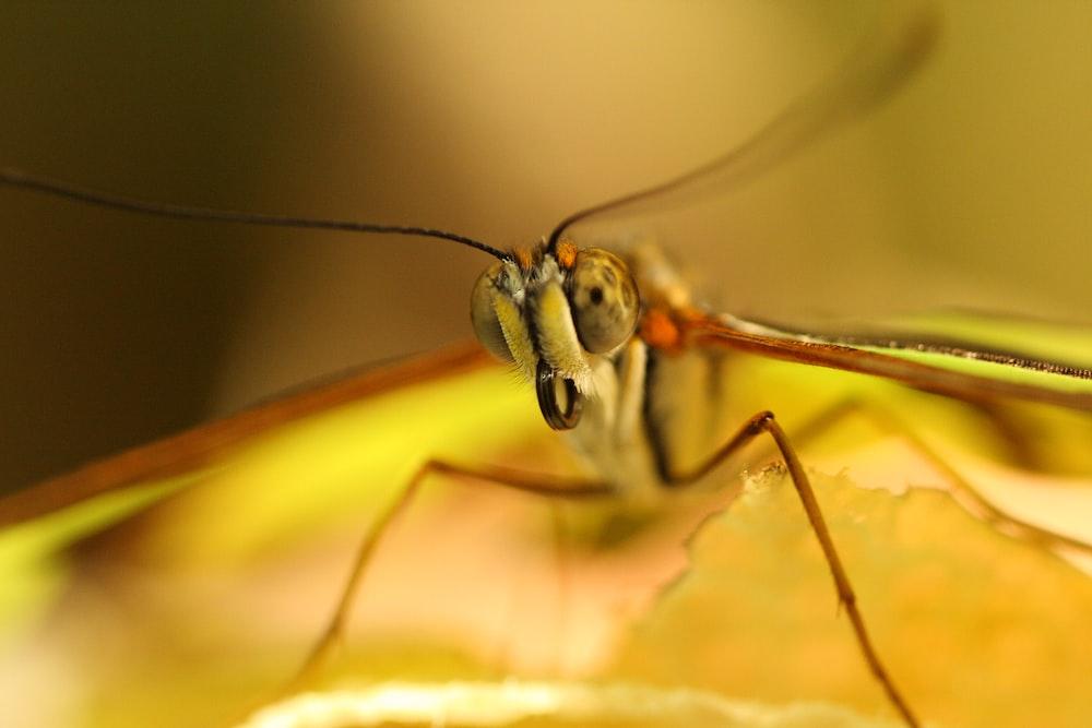 green dragonfly in macro shot