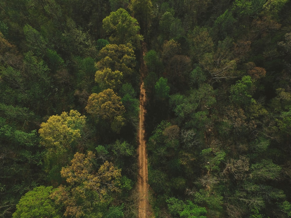 aerial photography of road between trees