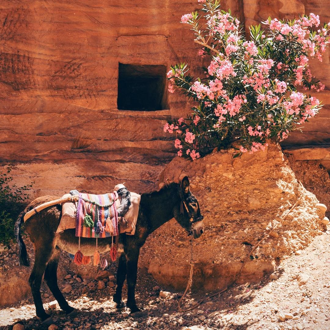 Donkey looking for shade in Petra, Jordan