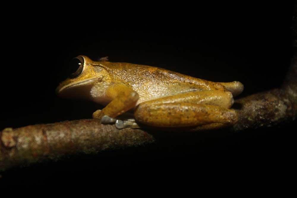 brown frog perched on tree branch