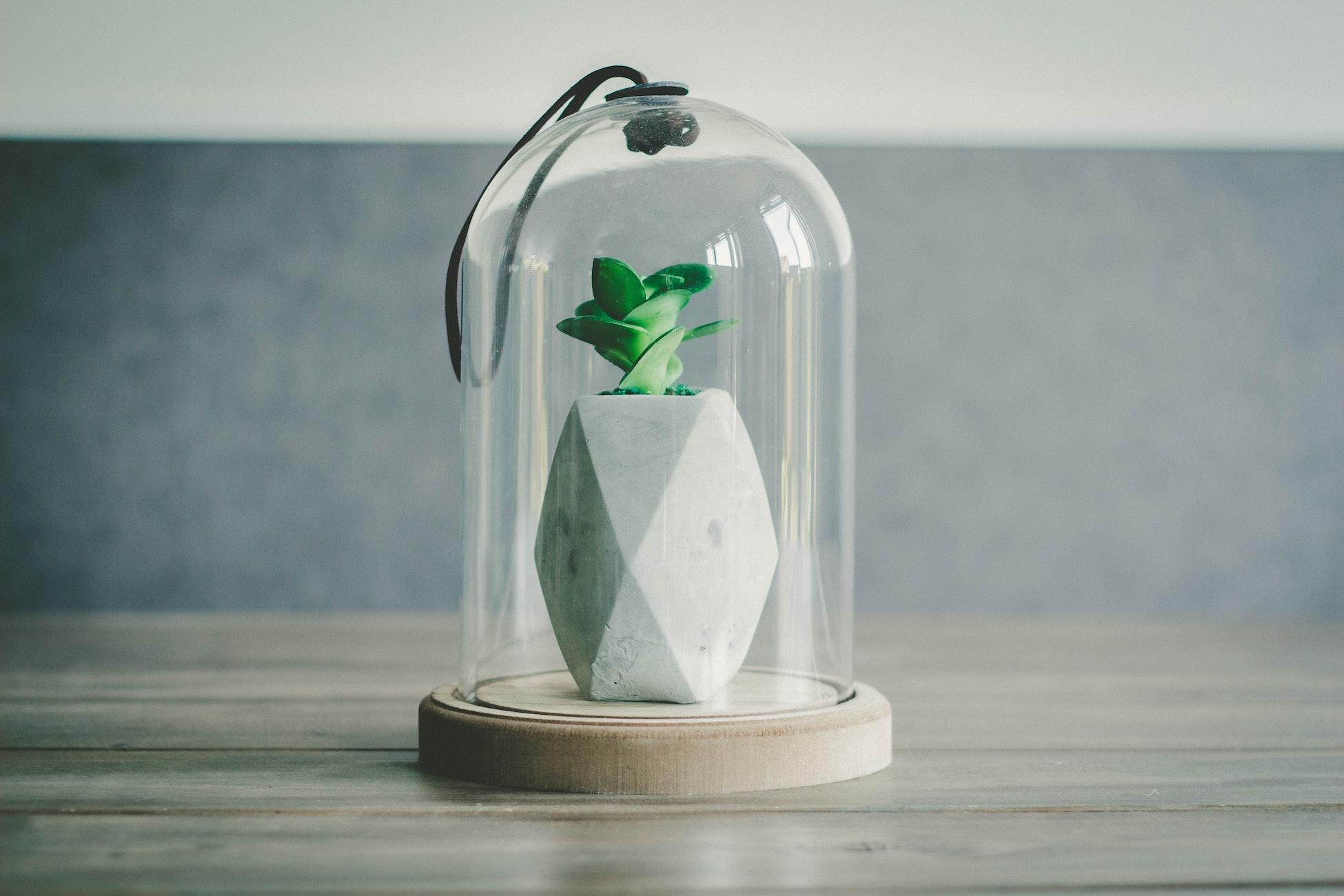 Cactus Terrarium| 23 DIY Mini Plant Terrarium Ideas
