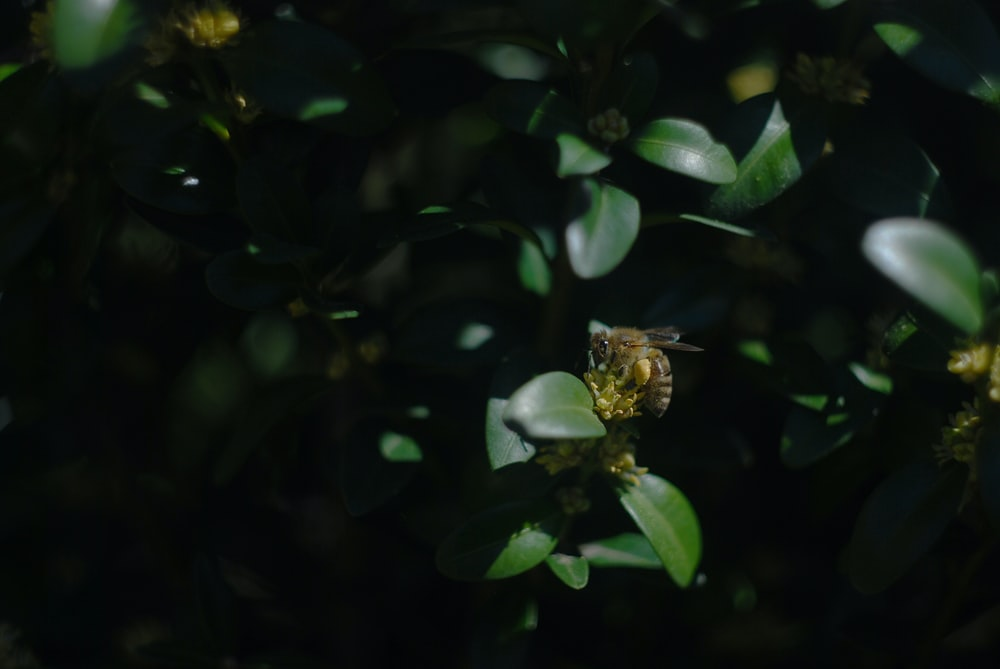 selective focus photography of bee on leaf