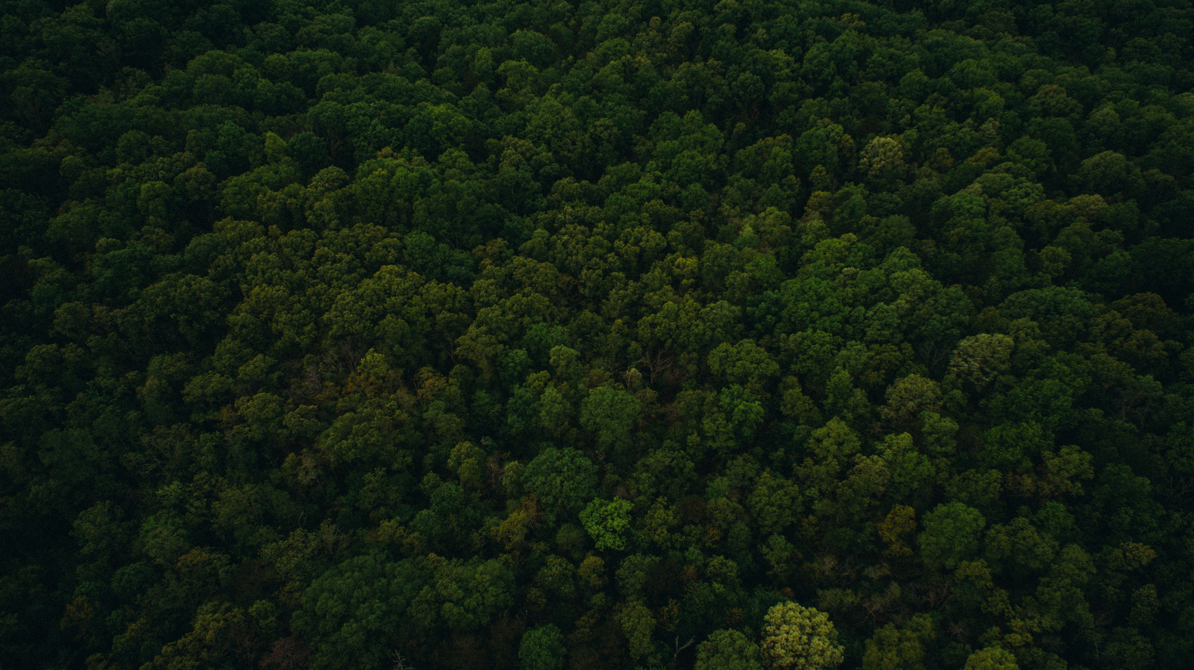 A drone shot of a green forest in Harrison
