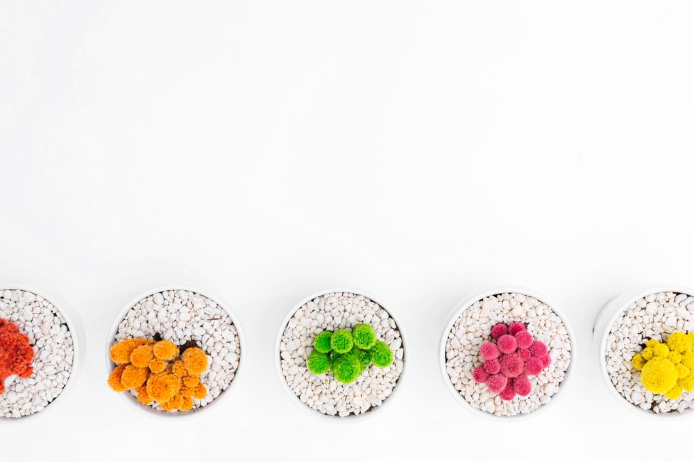 five assorted-color plants