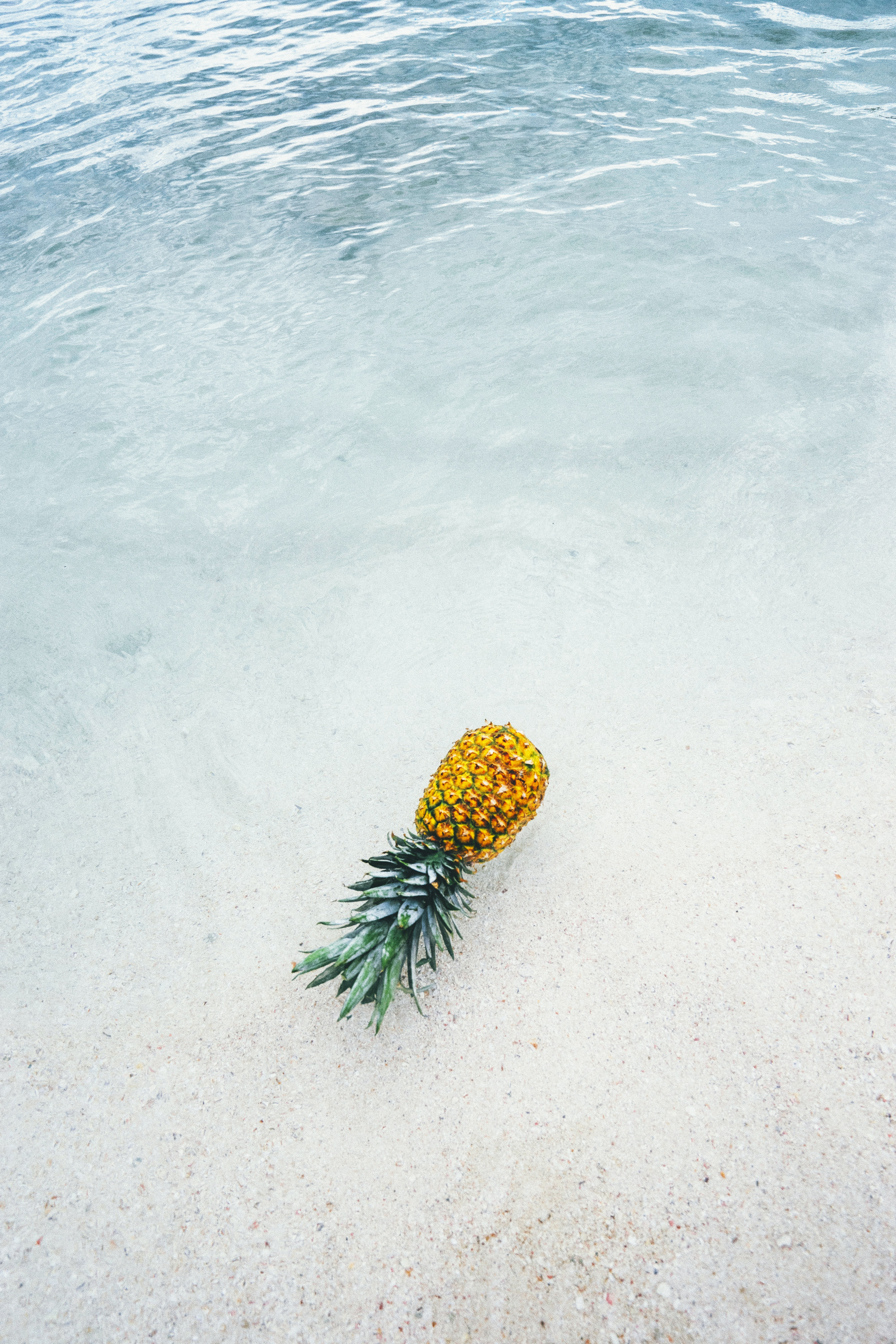 pineapple on seashore