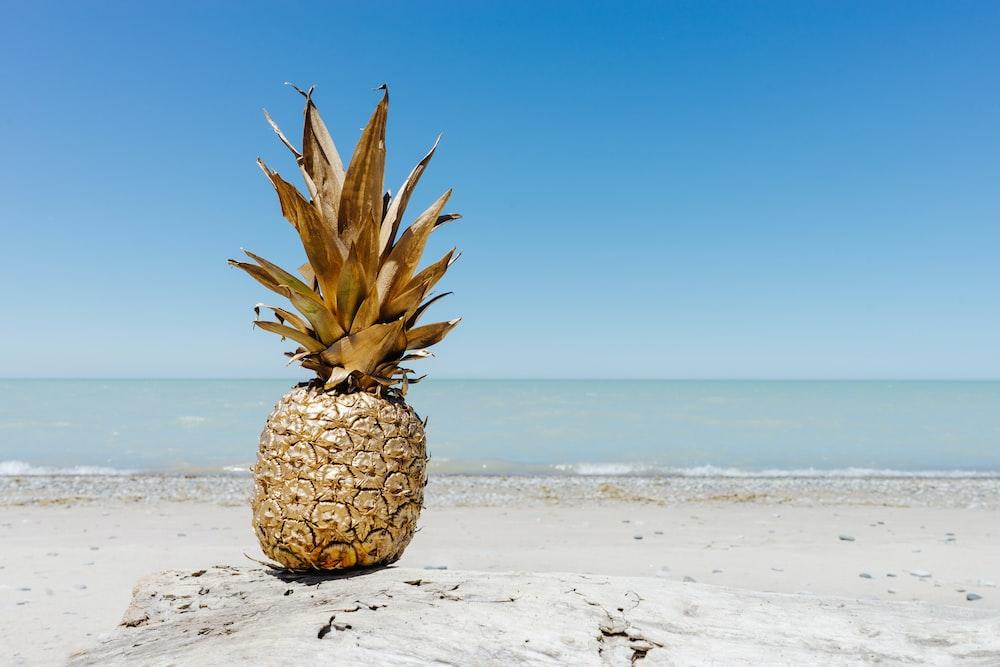 brown pineapple fruit on seashore