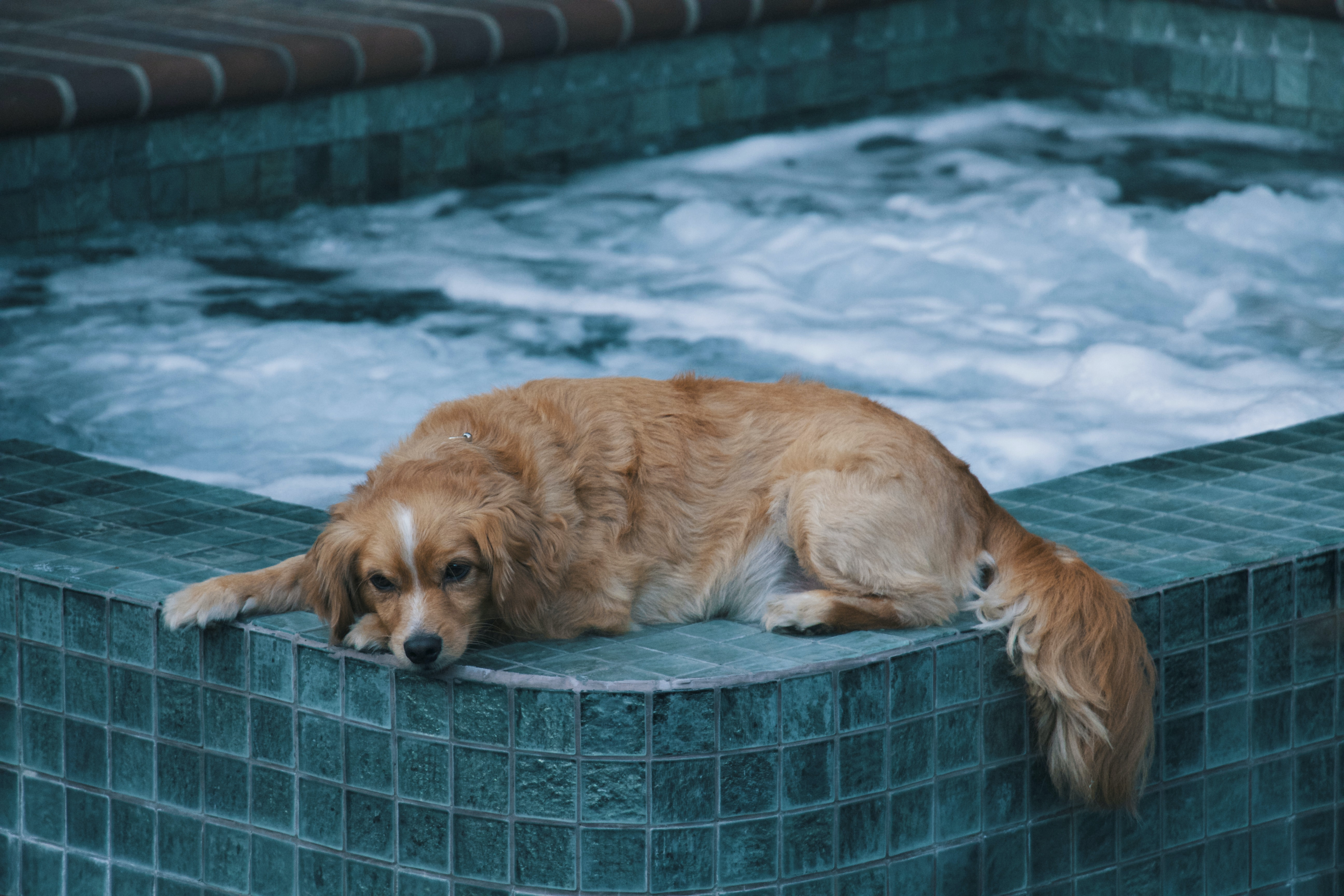 brown dog lying on edge of hot tub during daytime
