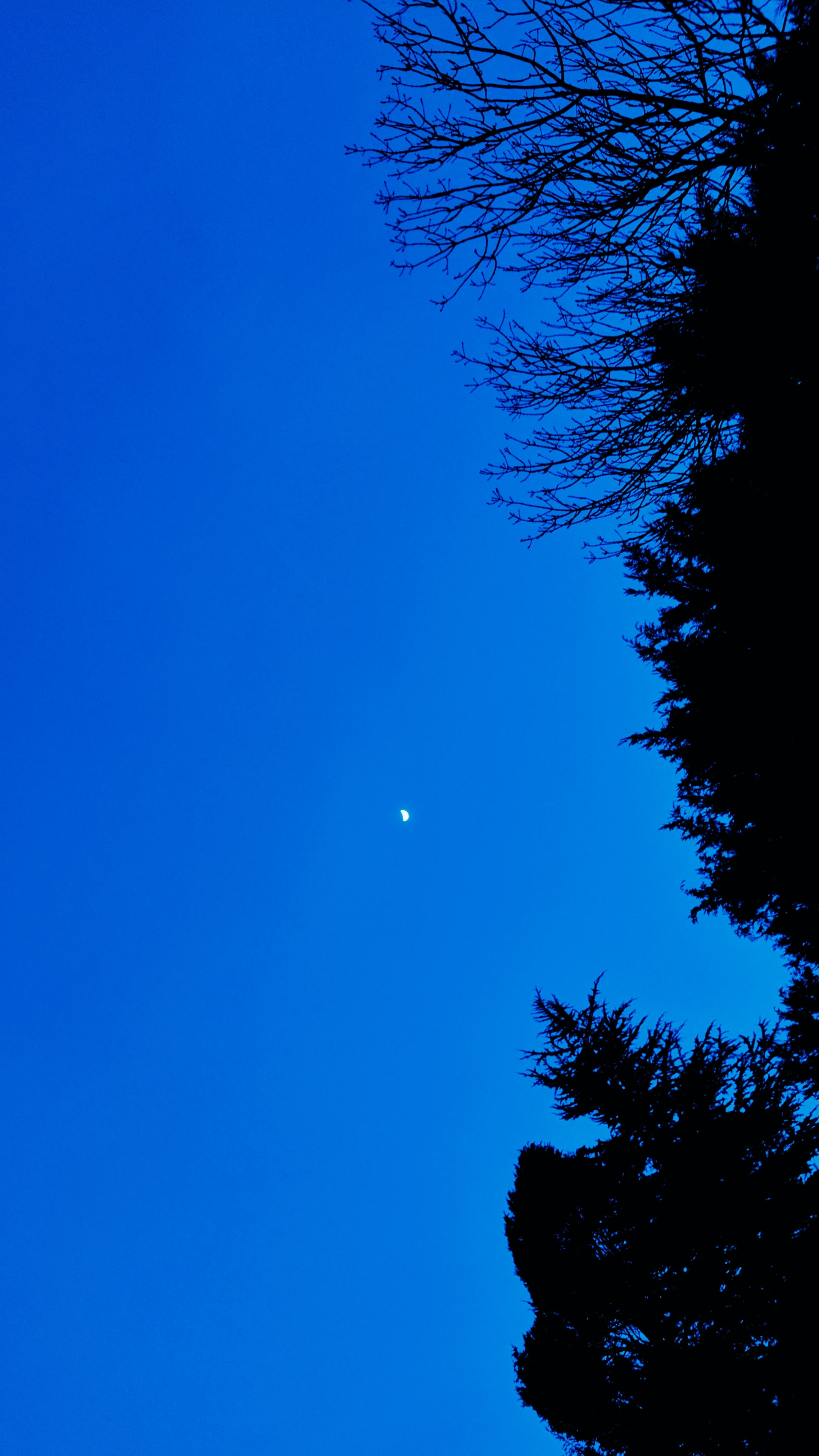 Trees and a blue night sky.