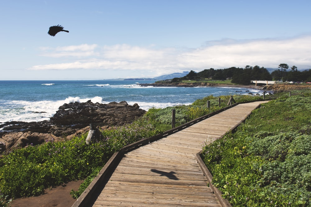 brown wooden bridge near ocean during daytime