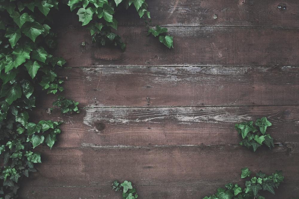 green vine plant beside wall