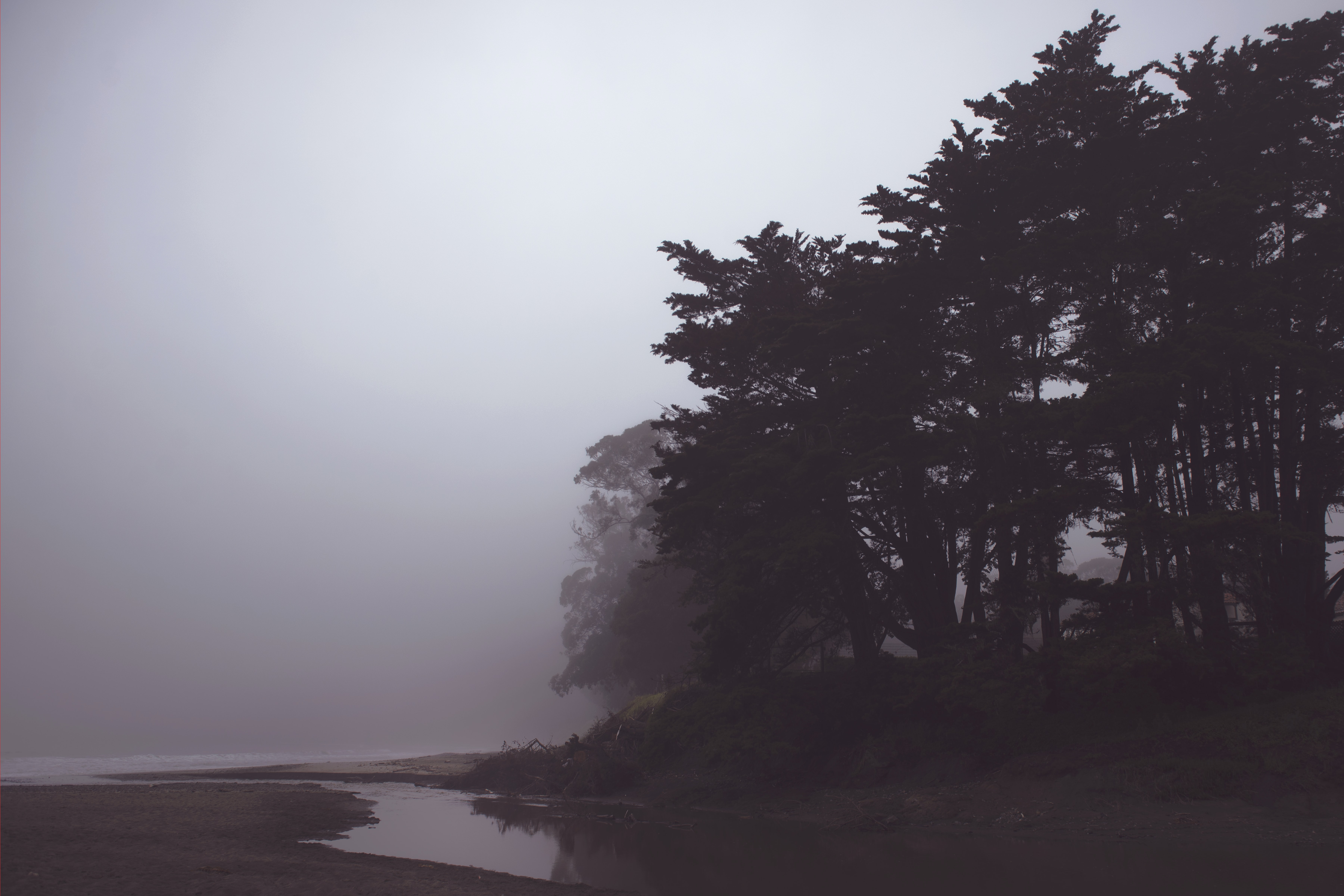 Foggy creek in San Simeon by silhouettes of trees