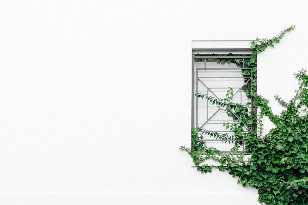 closed window near tree