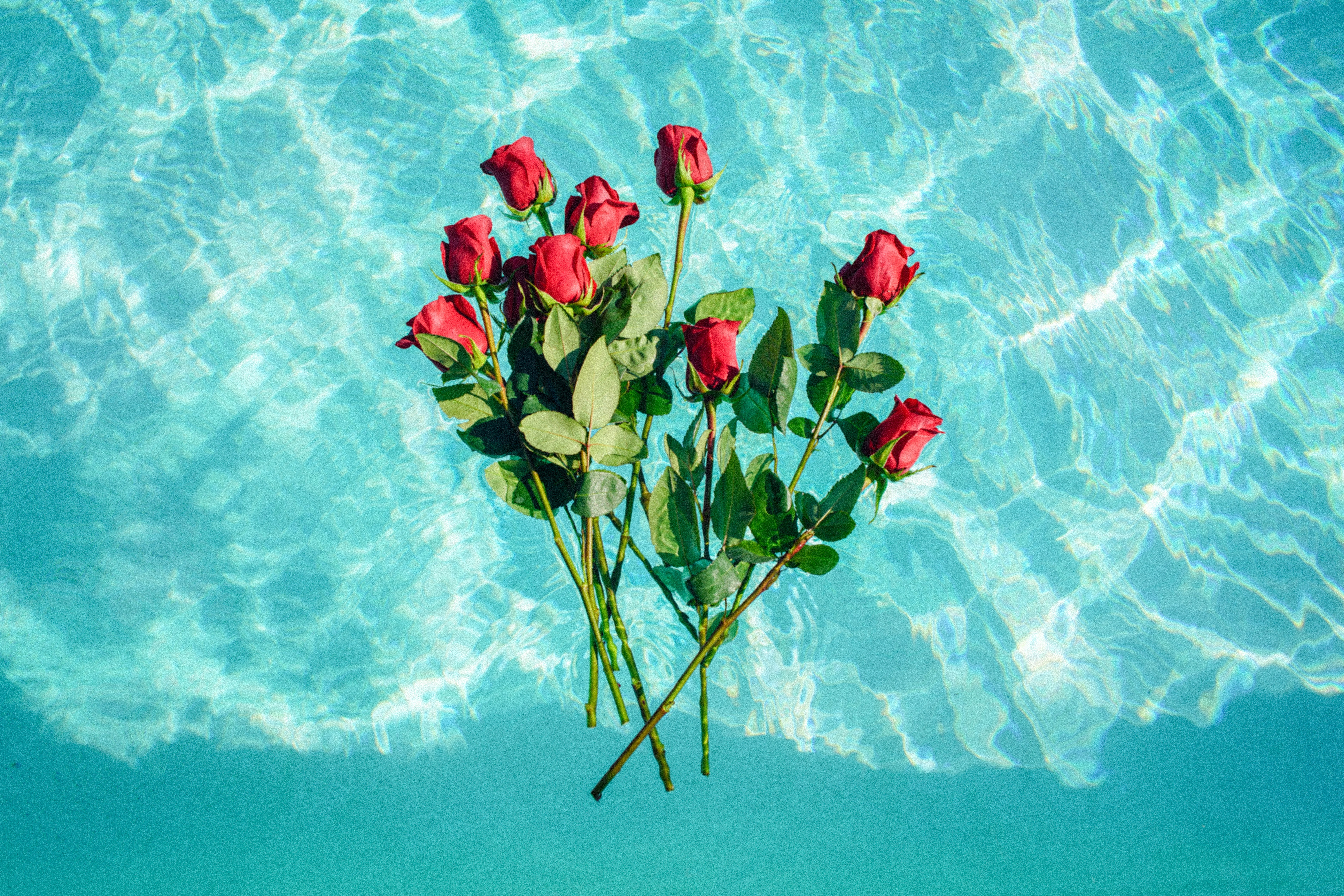 red roses on teal background