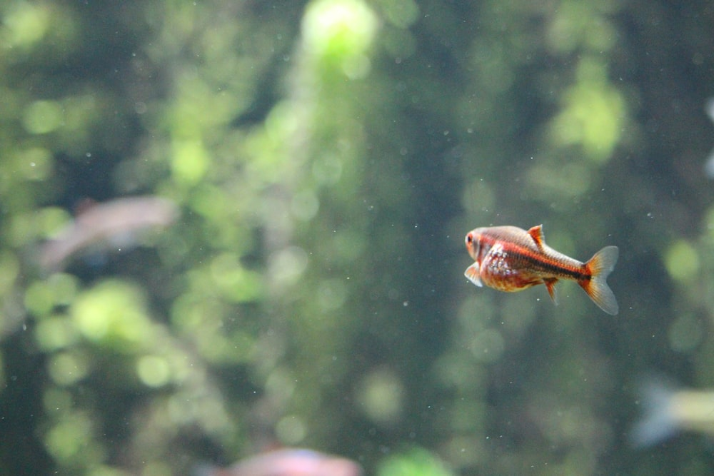 selective focus photography of brown fish