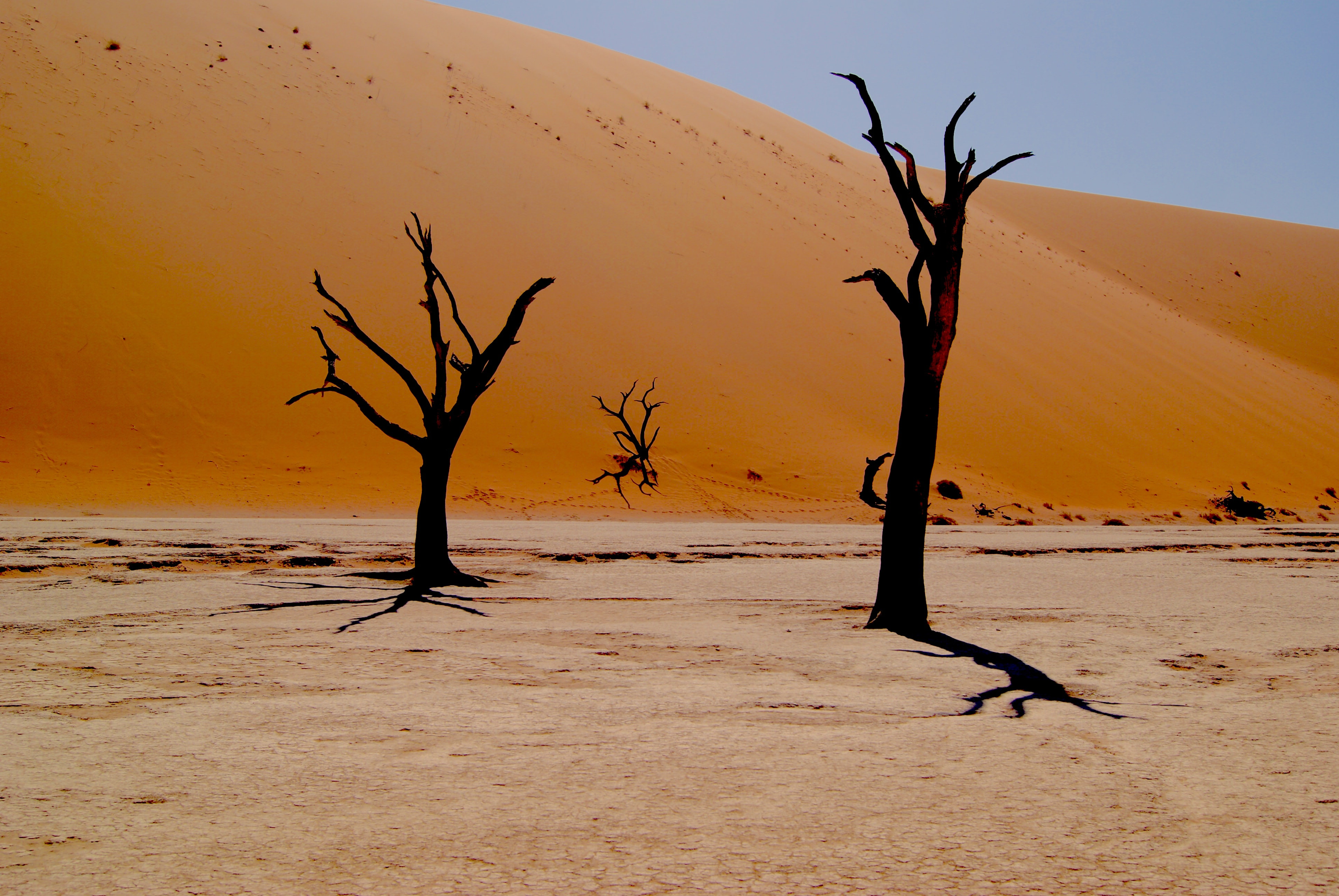 Desolate trees in the sandy desert of Deadvlei Hiking Trail